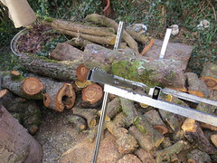 Nach dem Sturm / After the storm (thobern1) Tags: holz wood sturm storm sabine