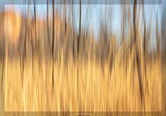 Kimberley Dreaming (Kevin Rheese) Tags: hiddenvalley dream westernaustralia mirima text border spiritual nationalpark abstract grassland impression kununurra series icm kimberley australia