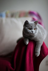 Resting on the armrest (h329) Tags: 50mm f095 hana noctilux sofa leica m cat