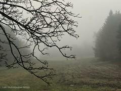 Photo of 2020 02 07 - misty morning 2a