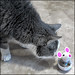Toy with Treats
