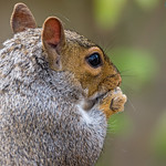 squirrel in the back garden