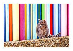 Le chat de Moretti (Marie Hacene) Tags: ladéfense moretti cheminée chat reflets urbain architecture