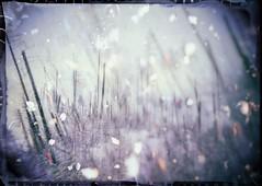 White As Snow (Crusty Da Klown) Tags: canada britishcolumbia bc forest wilderness nature frame white snow winter angle outside outdoors trees bush tones okanaganmountainprovincialpark