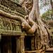 2019 - Cambodia - Siem Reap - Ta Prohm - 23