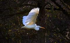 - (Maik Kregel) Tags: maikkregel canon 6ssd sigma 150600 flickr flicker wald tierportrait zoom wild