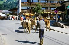 Kirchberg in Tirol (Okke Groot - in tekst en beeld) Tags: landbouw veeteelt koeien folklore kirchberg tirol oostenrijk