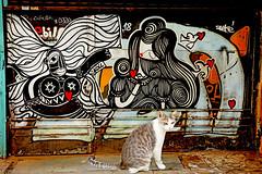 Happy Valentine's Caturday (kirstiecat) Tags: greece athens cat chat gato gatti feline kitty meow streetart graffiti γάτα caturday valentinesday