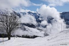 aufsteigender Nebel im Winter (phototom12) Tags: winter schnee baum berge nebel tal marbach marbachegg luzern