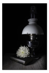 A Little Light Reading (Pamsar) Tags: oil lamp light flower chrysanthemum book reading still life