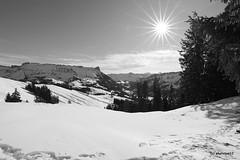 Schrattenfluh im Sonnenschein schwarz-weiss (phototom12) Tags: winter schnee berg berge schrattenfluh schibengütsch tannen bäume marbach marbachegg