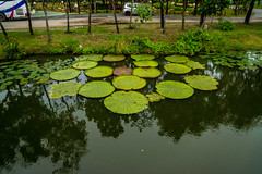 Lake with water lily pads and reflections in Muang Boran (Ancient Siam) in Samut Phrakan near Bangkok, Thailand (UweBKK (α 77 on )) Tags: muang boran ancient city siam park garden education recreation culture water reflection lake samut phrakan province bangkok thailand southeast asia sony alpha 77 slt dslr