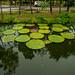 Lake with water lily pads and reflections in Muang Boran (Ancient Siam) in Samut Phrakan near Bangkok, Thailand
