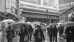 CITY RAIN (ajpscs) Tags: ©ajpscs ajpscs 2020 japan nippon 日本 japanese 東京 tokyo city people ニコン nikon d750 tokyostreetphotography streetphotography street shitamachi night strangers monochromatic grayscale monokuro blackwhite blkwht bw blancoynegro blackandwhite monochrome urban tokyoscene rain 雨 雨の日 cityrain tokyorain noplaceforthesun anotherrain umbrella 傘 whenitrainintokyo arainydayintokyo lettherainshinein rainspirits
