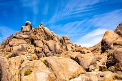 Alabama Hills (Dan Brekke) Tags: eastercalifornia easternsierra inyocounty sierranevada owensvalley mountains