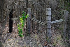 Corner Posts (Gene Ellison) Tags: fence posts shrubery undergrowth overgrown green shoot ranch rural naturephotography fujifilm velvia
