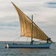 _DSC0099_DxO.jpg (jluc60) Tags: voile mauritanie boat voielactée bateau