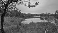 On a grey day (OzzRod) Tags: pentax k1 hdpentaxdfa1530mmf28 landscape murrah river estuary monochrome blackandwhite nswfarsouthcoast