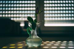 still life . (helmet13) Tags: d800e raw stilllife sunlight vase flower rose simplicity silence silhouette selectivefocus bokeh backlight aoi peaceaward world100f