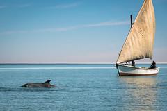 _DSC0125.jpg (jluc60) Tags: mauritanie voielactée bateau boat