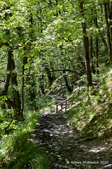 River Neath (Ashley Middleton Photography) Tags: brecknockshire pontneddfechan copse europe river riverneath unitedkingdom wales waterfallcountry woodland