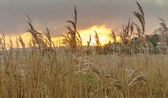 Morning... (Patricia Wilden) Tags: morning cleynextthesea norfolkuk landscape eos70d cley northnorfolk norfolk light