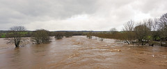 Photo of After Dennis - River Eden at Langwathby.
