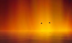 Solitude 718 (Wim Koopman) Tags: birds geese flight flying mystical setting fire northern light horizon water reflections bloom flowing glowing flowingandglowing