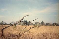 Kampina (Der Ohlsen) Tags: jellycam analog 35mm kb colour film c41 agfavista400 oisterwijk kampina niederlande netherlands