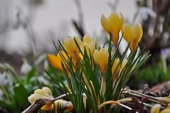 Frühlingserwachen im Garten (Uli He - Fotofee) Tags: ulrike ulrikehe uli ulihe ulrikehergert hergert nikon nikond90 fotofee meinweg burghaun rhön vorderrhön sturm sabine sturmschäden