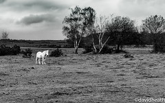 The White Horse (davidheath01) Tags: amateur amateurphotographer amateurphotography beauty beautiful contrast digital depthoffield d850 dslr england english englishforest forest field flowers ff flower green grass holiday holidays happy kissed landscape light landscapephotography lanscape love leaves monochrome nikon nikkor nikond850 nature newforest open outside old picture photography photograph photographer photo paradise sun sky summer travels traveling travel travelling tree trees uk vacation view village wood weather white winter wildlife horse whitehorse