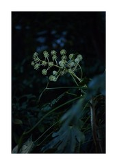This work is 10/18 works taken on 2020/1/5 (shin ikegami) Tags: sony ilce7m2 a7ii sonycamera 50mm lomography lomoartlens newjupiter3 tokyo 単焦点 iso800 ndfilter light shadow 自然 nature naturephotography 玉ボケ bokeh depthoffield art artphotography japan earth asia portrait portraitphotography