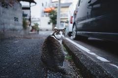 猫 (fumi*23) Tags: ilce7rm3 sony sel24f14gm fe24mmf14gm emount 24mm a7r3 animal alley street cat chat katze neko gato bokeh ねこ 猫 ソニー 路地