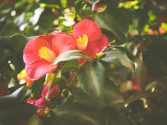 P1210889 (Trude Graz) Tags: blumenundpflanzen botanischergarten graz rot red