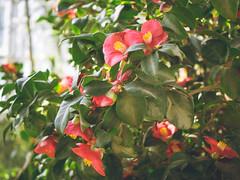P1210888 (Trude Graz) Tags: blumenundpflanzen botanischergarten graz