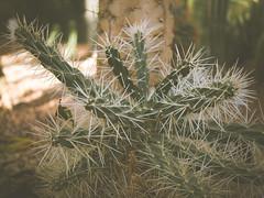 P1210842 (Trude Graz) Tags: blumenundpflanzen botanischergarten graz kaktus