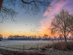 Walk the dog (Jan R. Ubels) Tags: hond dog zonsopkomst januari olympusm12100mmf40 olympus 2017 em1markii olympusem1markii 201701 prolens flickr m43