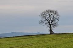 Einer meiner Lieblingsbäume (Uli He - Fotofee) Tags: ulrike ulrikehe uli ulihe ulrikehergert hergert nikon nikond90 fotofee meinweg burghaun rhön vorderrhön sturm sabine sturmschäden