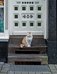 Wetzlar (Lahn), .... Katze (bleibend) Tags: katze em5 2020 wetzlar hessen