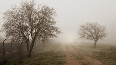 Amanecer nublado (claruro) Tags: amanecer atardecer nublado niebla árbol camino