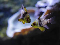 Aquarium (D. Huteau) Tags: aquarium poissons flickr friday