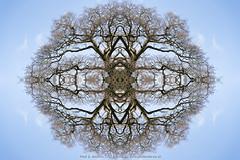 DSC00547-Edit (Paul S Jenkins Photography) Tags: arborealkaleidography branches kaleidograph kaleidography tree waterlooville england unitedkingdom