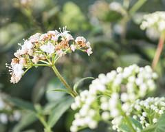 P1210868 (Trude Graz) Tags: blumenundpflanzen botanischergarten graz
