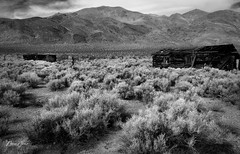 Taking back the Town (NormFox) Tags: airid america architecture art artistic bw bnw backcountry badlands blackandwhite blackandwhiteartistry california color colors desert digart digitalfineart digitalphotography dry enviornment fall fineart fineartphotography garlock ghosttown hiking kerncounty landscape mojave monoart monochromatic monochrome mood mountains naturalbeauty normfoxphotography outdoor outdoors photography photographyart quite remote rugged scenic sequoia sequoiatree serene sierra sky travel trees usa unitedstates valley abandoned hike normfoxsmugmugcom