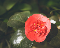 P1210893 (Trude Graz) Tags: blumenundpflanzen botanischergarten graz red rot