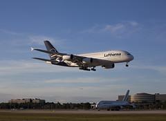 D-AIMD Airbus A380-841 Lufthansa (corkspotter / Paul Daly) Tags: daimd airbus a380841 a388 48 l4j fmbe 3c65a4 dlh lh lufthansa 2010 fwwak 20101116 kmia mia miami