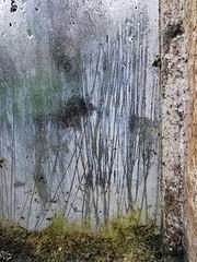 Palm House Window (Feldore) Tags: window botanic gardens belfast northern ireland irish abstract rain feldore mchugh trace textures frame raining