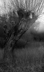 Leinemasch 4 (salparadise666) Tags: zorki 3m industar 22 agfa apx 100 caffenol rs 20min nils volkmer rangefinder russian film analogue willows hannover leinemasch germany vintage lens nature landscape