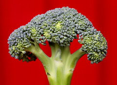 broccoli tree in the red wood (HansHolt) Tags: blue red macro green groen blauw dof purple broccoli vegetable cauliflower rood vegetables canon eos bokeh 100mm usm hmm f28 ef 6d macromondays tree