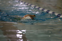 IMG_2609 (IronGirl Photos) Tags: mtc swim 2020